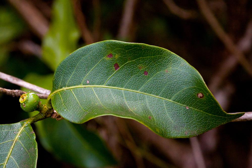 Sao Jose do Rio Preto_SP, Brasil...Programa Biota da Unesp, na foto detalhe de uma planta...The Biota program of Unesp, in this photo a plant.. .Foto: JOAO MARCOS ROSA / NITRO