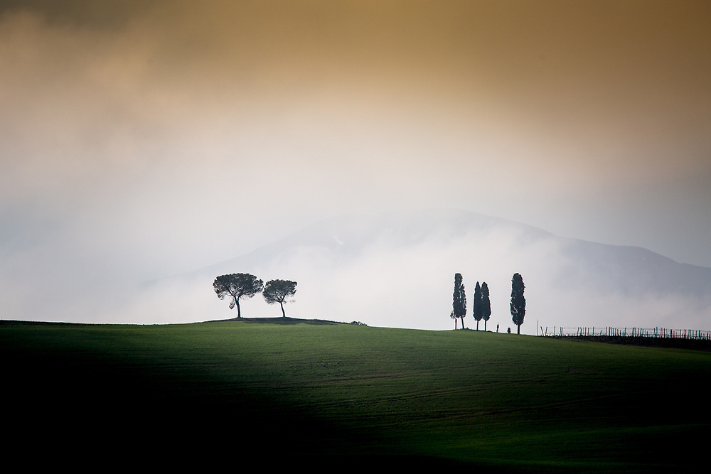 Cypresses and Pines.<br />