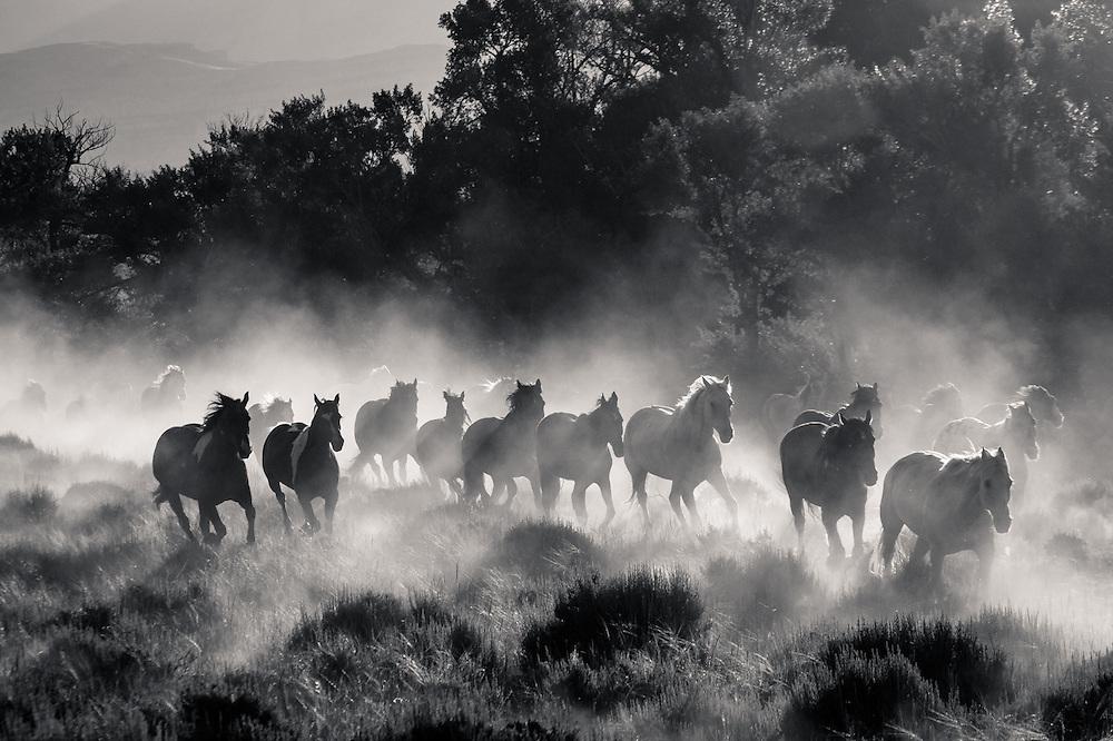 Running Horses.