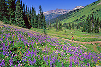 A hiker enjoys the wildflower meadows by Singing Pass, Whistler, BC