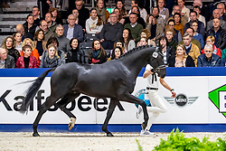 397, More Legends<br /> KWPN hengstenkeuring - 's Hertogenbosch 2020<br /> © Hippo Foto - Dirk Caremans<br /> 31/01/2020