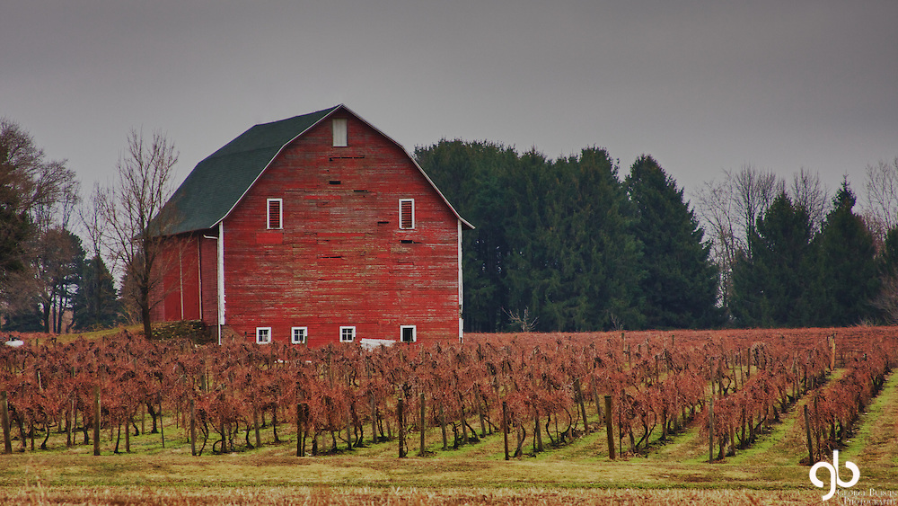 I found this barn in South Bend, Indiana.  It was a rainy day and the ground was muddy.  I love the grapes in front of the barn.