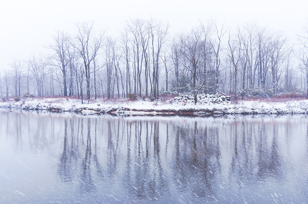Skeletal, bare trees reflect in the glassy waters below them across a snowy winter scene near Davis, West Virginia.