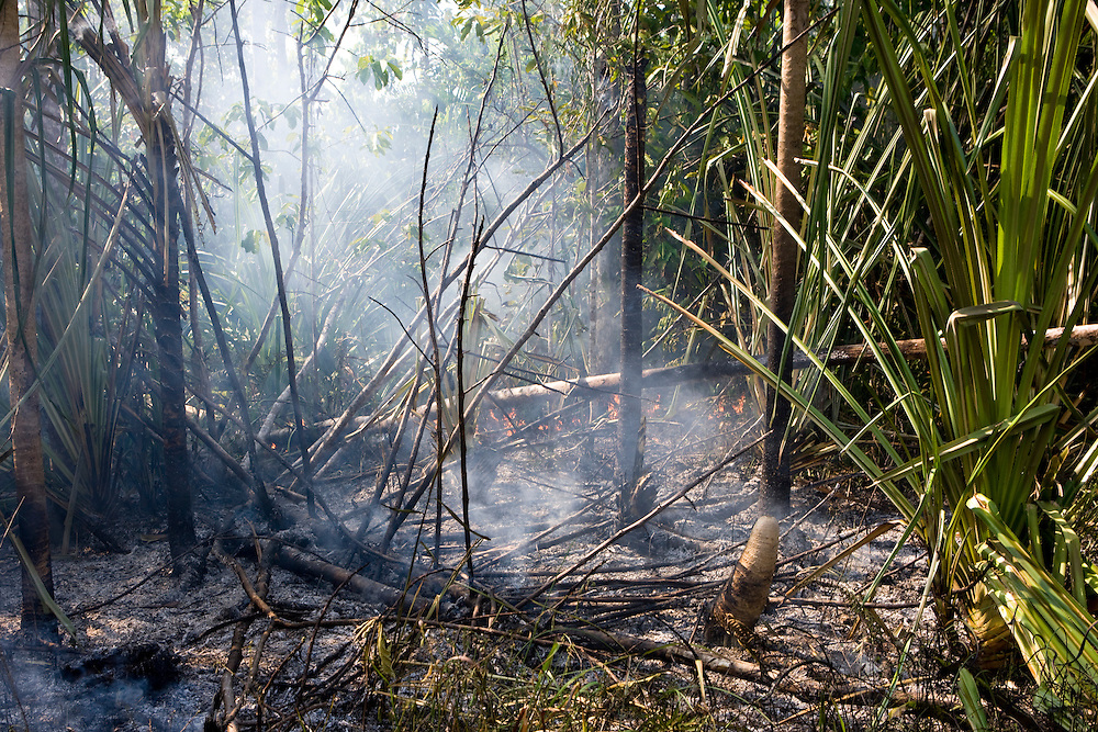 A small fire on the side of the Trans Papuan Highway in Indonesia, Sept. 4, 2008..Daniel Beltra/Greenpeace