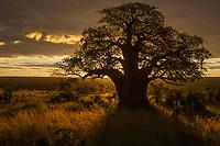 Tarangire National Park <br /> Tanzania, Africa