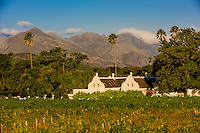 Vineyards, Allee Bleue  Wine Estate, Groot Drakenstein, Cape Winelands, near Cape Town, South Africa.