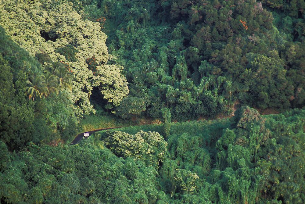 Hana highway and tropical forest; Hana coast, Maui, Hawaii.
