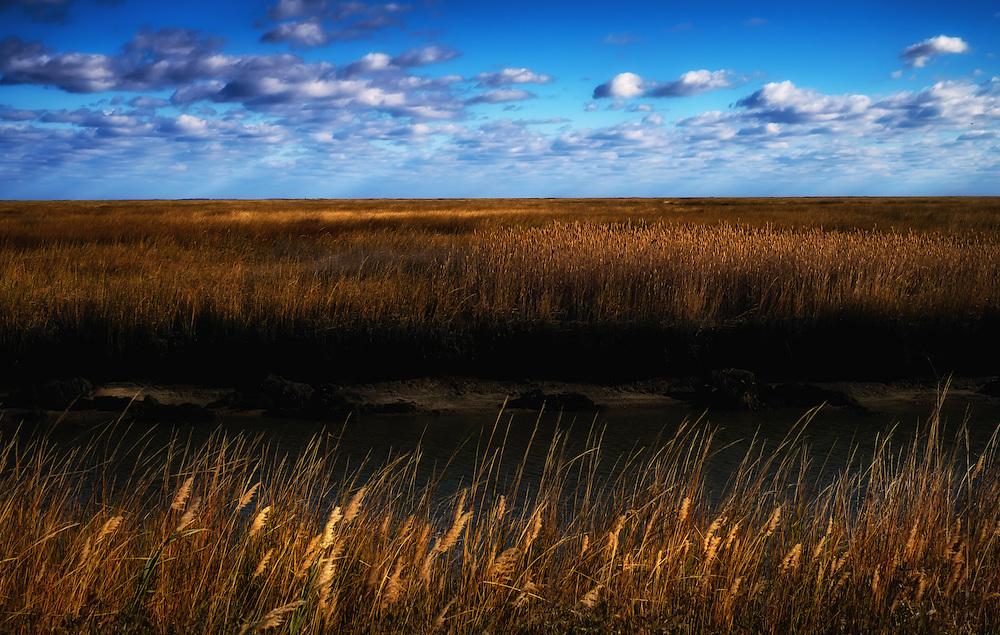 Marsh view, Bombay Hook National Wildlife Refuge, Delaware.