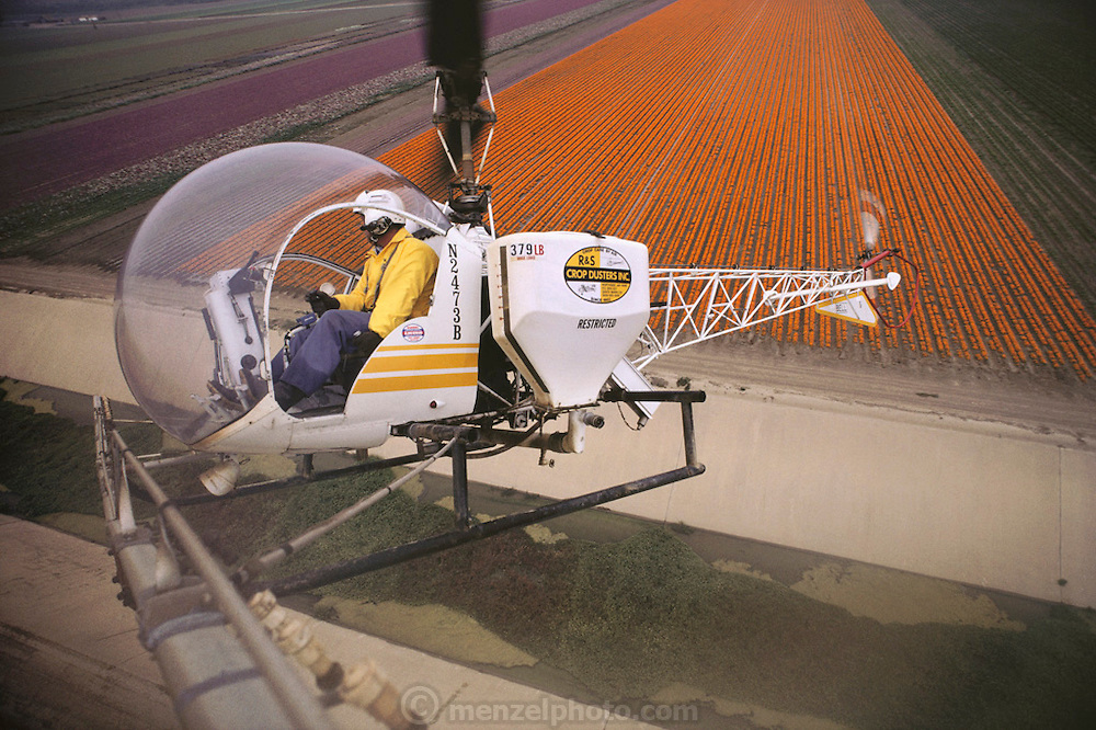 Crop dusting. Lompoc, California, USA. Spraying fields of flowers grown for seed with pesticides.