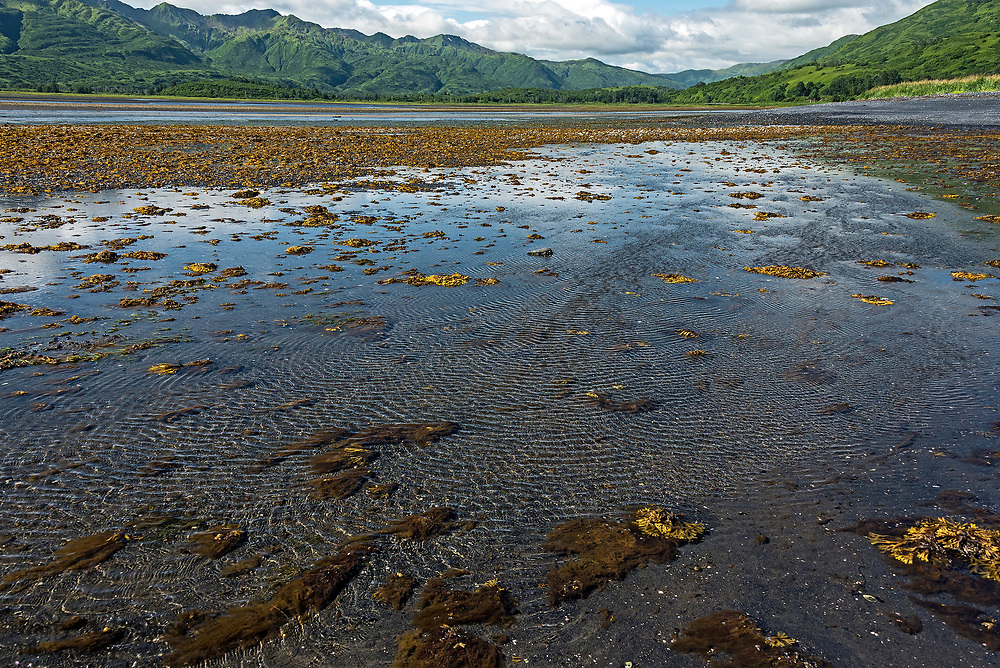 Low tide in Middle Bay;eastern Kodiak Island; Alaska