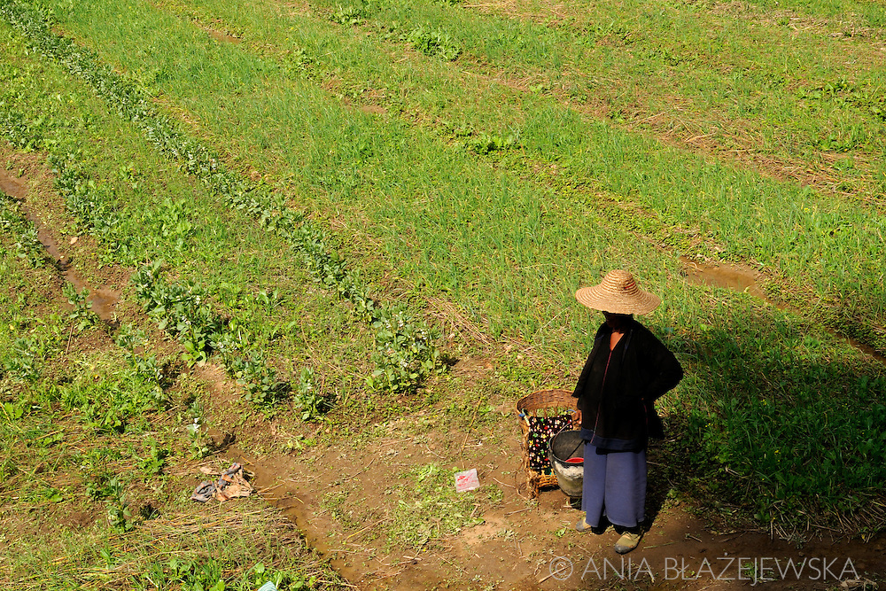 Myanmar/Burma. Woman resting on the green field.