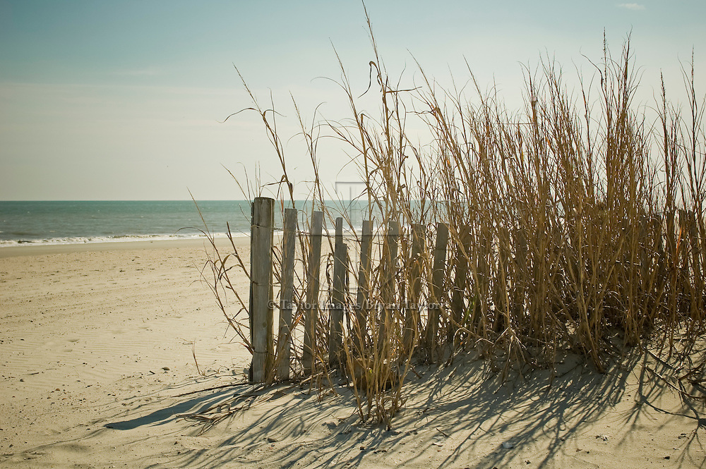An old weathered fence stands alone among the sea oats at low tide to guard against erosion in Myrtle Beach, South Carolina.