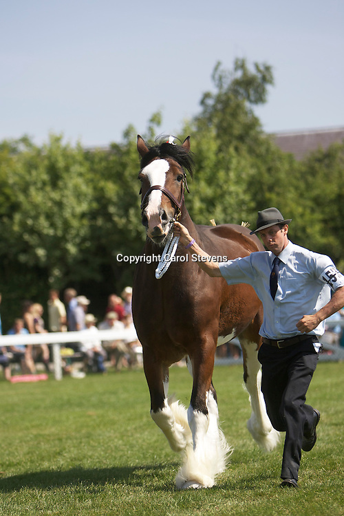 Mrs M McIntyre's 5 year old bay gelding  Rocky<br /> s Millisle Solway Bay shown by Ronald Brewster<br /> 1st  Gelding three years old and over class