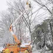 Utilities workers clearing snow laden branches from power and electrical lines during a blizzard in Wakefield, Massachusetts, New Engalnd