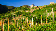 Vineyards and farm house, Corniglia, Cinque Terre, Liguria, Italy