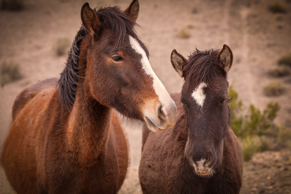 Young wild horses in Placitas, New Mexico