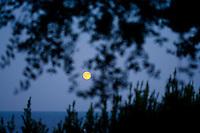 Luna che sorge tra gli ulivi, sul Canale dOtranto