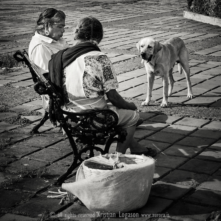 Hungry dog waiting to get lucky while two elderly ladies rest for a lunchbreake at a park bench in Pazcuaro in Mexico