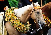 Horse Parade, lei, Hawaii