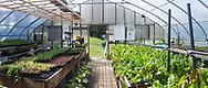 Harmony Farm, Goshen, NY  - green house