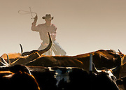 The dust and flies almost obscures this cowboy as he gathers up cattle on the North Pueblo Ranch in Colorado.