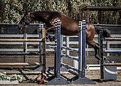Horse No 33
