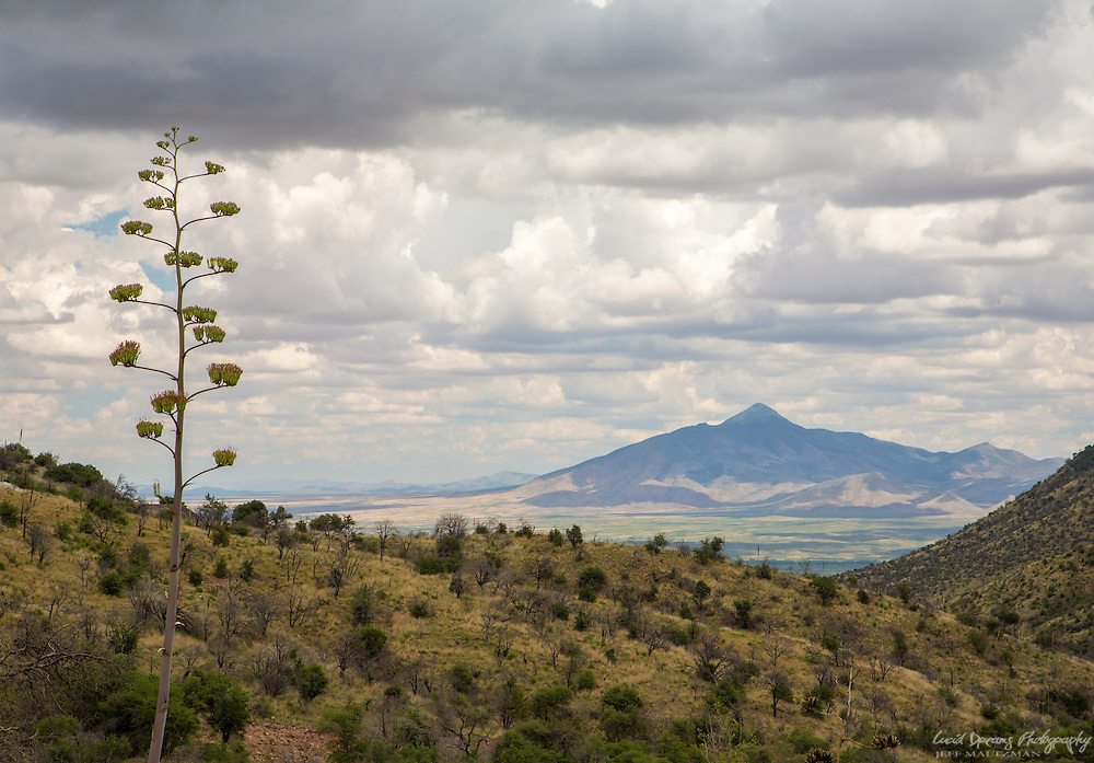 An agave stalk rising over the rolling hills in Coronado National Memorial