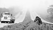 Sao Joaquim de Bicas_MG, Brasil...Cavalo na rodovia em Sao Joaquim de Bicas...The horse in the motorway in Sao Joaquim de Bicas...Foto: LEO DRUMOND / NITRO