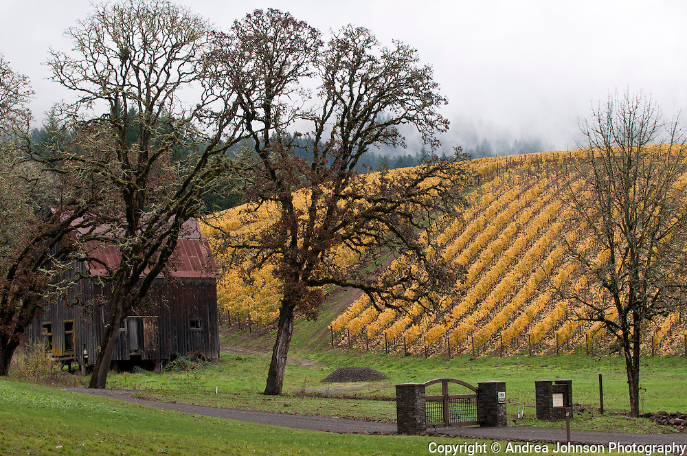 Colene Clemens winery, Chehalem Mountains, Willamette Valley, Oregon