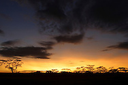 Serengeti sunrise, Tanzania