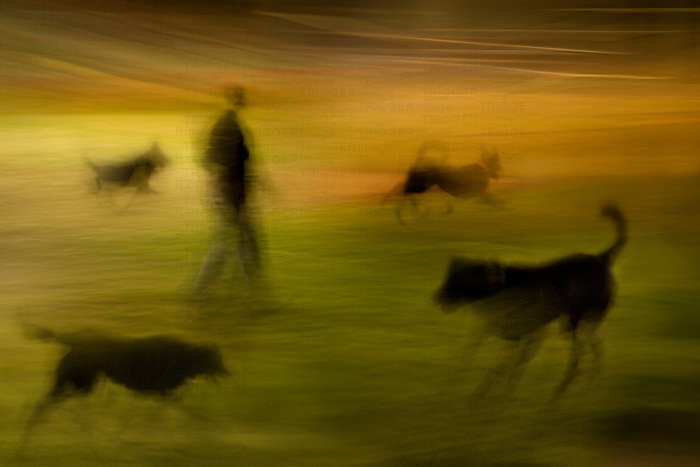 A man walking with four dogs with blurred effect
