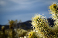 Close up of coctus in the desert.