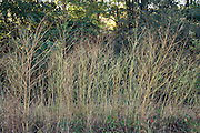 tall grasses shrub at the side of the road