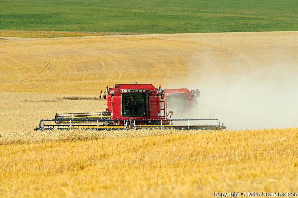 Combine harvesting duram wheat<br />Carmichael<br />Saskatchewan<br />Canada