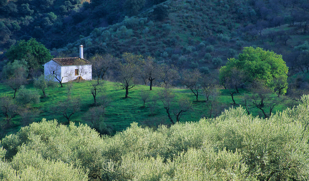 A small rustic house (casita) in an almond & olive grove, Andalucia, Spain