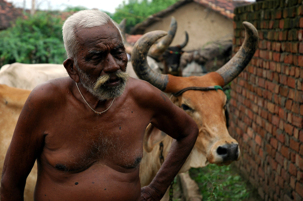 An elder with his cattle...by Michael Benanav - mbenanav@gmail.com