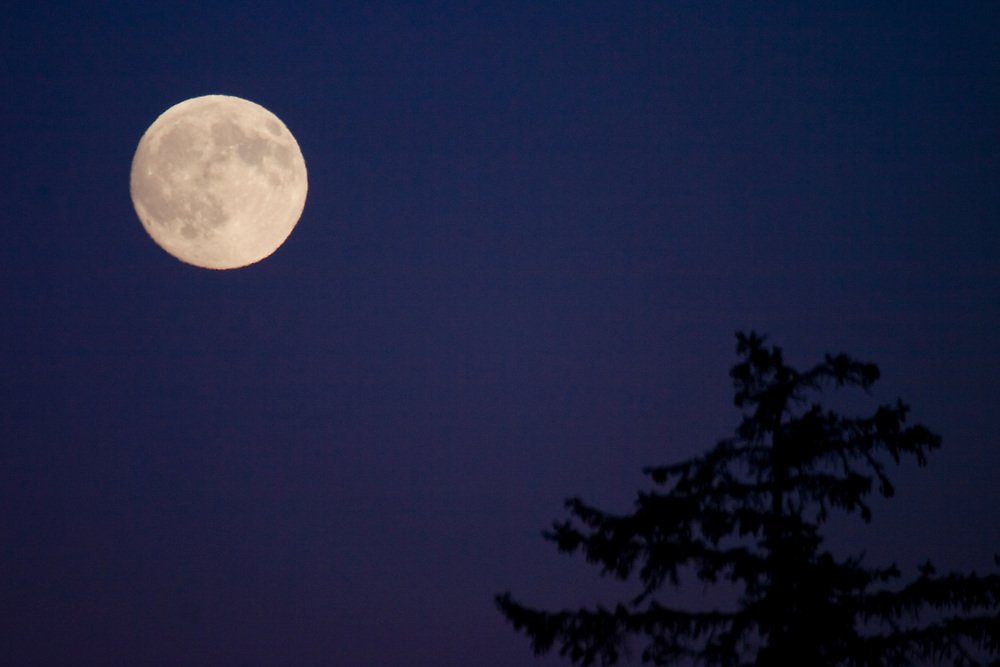 A full moon in the upper part of the frame with a spruce tree in the lower part.