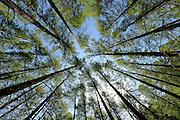 &copy; Filippo Alfero<br /> Rifugio Daniele Arlaud, Montagne Seu, Parco Naturale Gran Bosco<br /> Salbertrand (TO), 26/06/2013