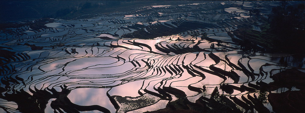 Chine. Province du Yunnan. Yuanyang, rizieres en eau. // China, Yunnan, Yuanyang, terraced paddy-fields