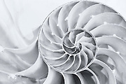 nautilus, shell, pattern, spiral