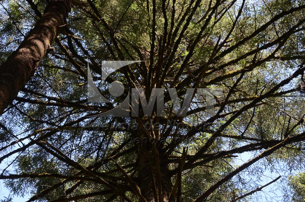 """Amanalco, México (Noviembre 07, 2016).- Rafael Pacchiano Alamán, Titular de SEMARNAT en compañía de Raúl Vargas Secretario Estatal de Medio Ambiente, realizaron un recorrido de Aprovechamiento Forestal en el Ejido denomido el """"Capulín"""". Agencia MVT / José Hernández."""