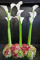 Three calla lily kept on the floor