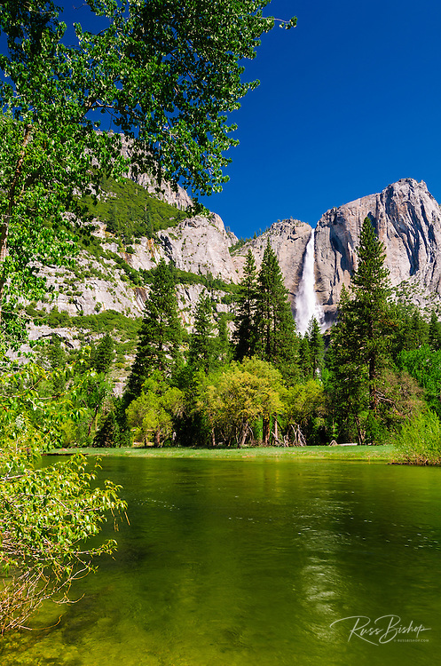 Yosemite Falls from the Merced River, Yosemite National Park, California USA