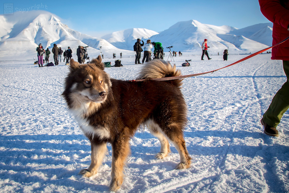 Husky dog at Svalbard, Norway during the 2015 total solar eclipse