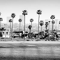 Newport Beach Skyline Panorama Photo in Black and White. Picture includes Newport Beach office buildings, Balboa Peninsula beach, Peninsula Park, palm trees, and the Newport Beach coastline. Panoramic picture ratio is 1:3.