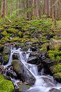 A small cascading creek inside Olympic National Park, Washington
