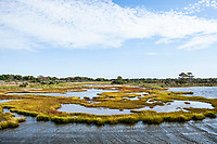 The salt marshes of Assateague Island National Seashore, a barrier island on the Atlantic ocean, Maryland, USA.