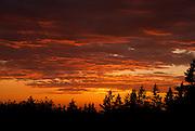 A fiery orange sunset glows over fir trees, Seattle, Washington.
