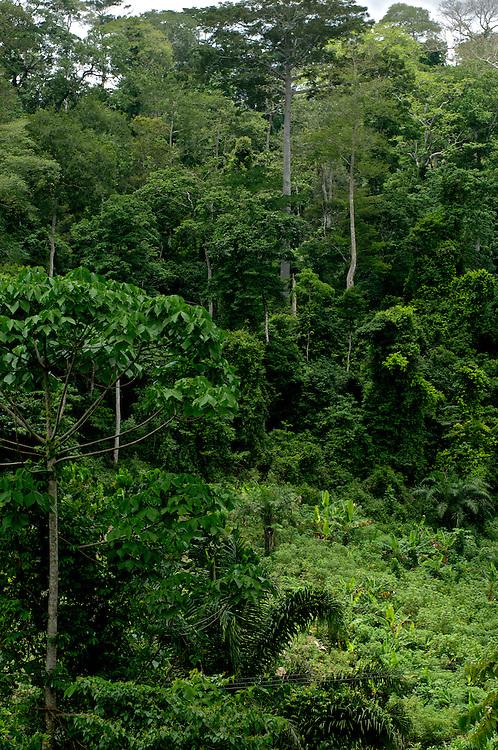 Primal Rain Forest, Ghana