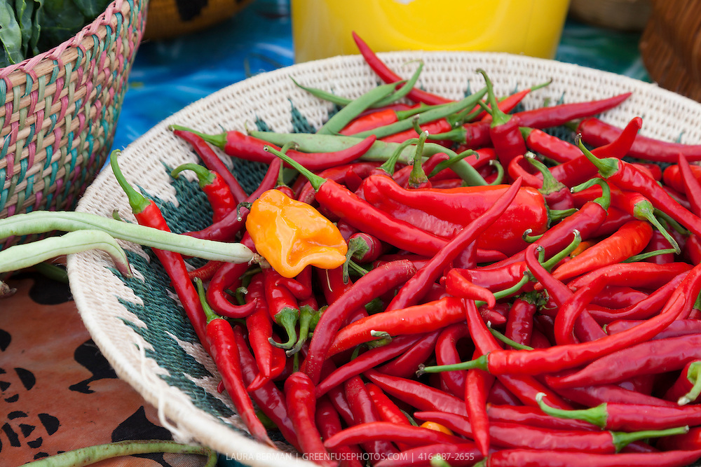 A basket of bright red Cayenne peppers at a farmers market. The peppers were grown by Southern Horizons farmers Margaret Zondo and Rodney Garnes at their market garden at McVean incubator farm, Brampton, Ontario.